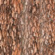 Pine&#039;s bark texture - Stock Photo
