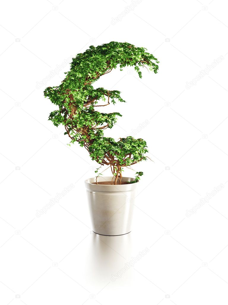 Growing euro tree isolated 3d render — Stok fotoğraf #5433778