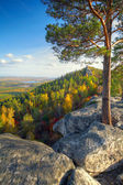 Autumn landscape with mountains and pine tree — Stock Photo