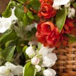 Bouquet flowering quince and leaf green — Stock Photo