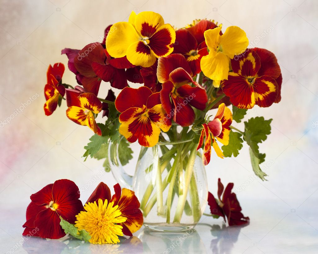 Bouquet flowering quince pansy — Stock Photo #5973542
