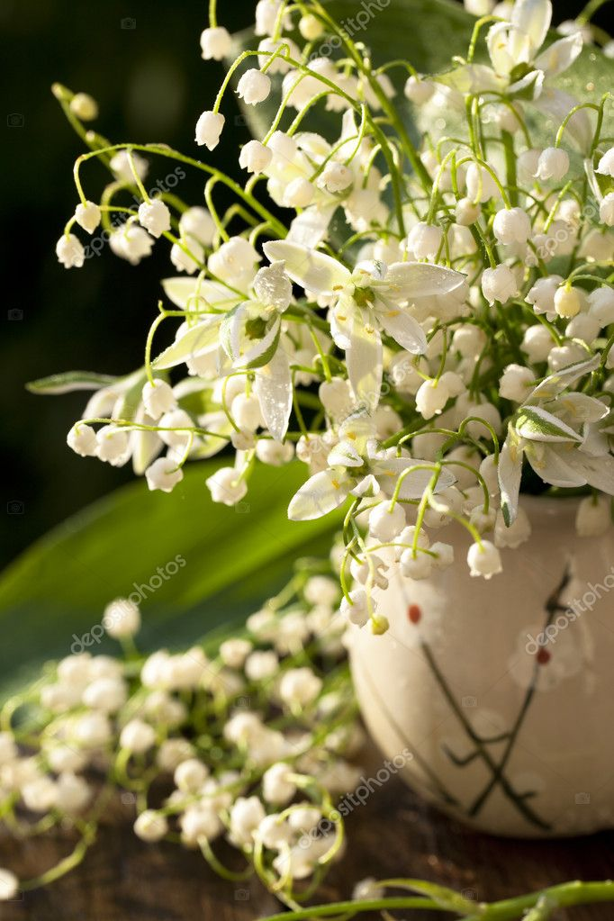 Lily of the valley sunlit   Stock Photo #5973970