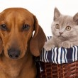 Foto Stock: Kitten and dog