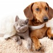 Stock Photo: Cat and dog