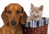 Kitten and dog — Stock Photo