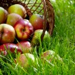 Apples in the Basket. — Stock Photo #6257597