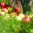 Apples in the Basket. — Stock Photo #6257893