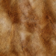Fur texture. Background — Stock Photo
