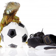 Iguana in football concept - Stock Photo