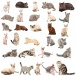 Collection of a cats — Stock Photo
