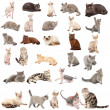 Collection of a cats - Stock Photo