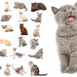 Stock Photo: Collection of cats
