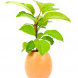 Green plant in egg — Stock Photo