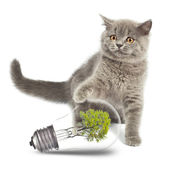 Kitten with environmentally friendly light bulb — Stock Photo