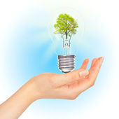 Tree in lamp on hand. — Stock Photo