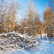 Winter field under blue sky — Stock Photo