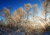 зимние поле под голубым небом — Стоковое фото