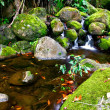Small creek in the jungle — Stock Photo