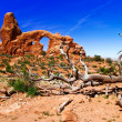 Sunny day in Arches Canyon - Stock fotografie
