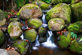Small creek in the jungle — Стоковое фото
