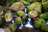 Small creek in the jungle — Stock fotografie