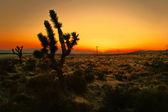 Gün batarken çölde — Stok fotoğraf