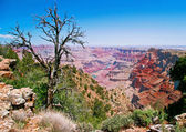 Great view on Grand Canyon — 图库照片