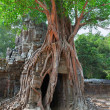 Tropical tree on Ta Som, Angkor wat in Siem Reap,Cambodia - Stock Photo