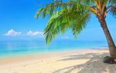 Beach with coconut palm tree — Stock Photo