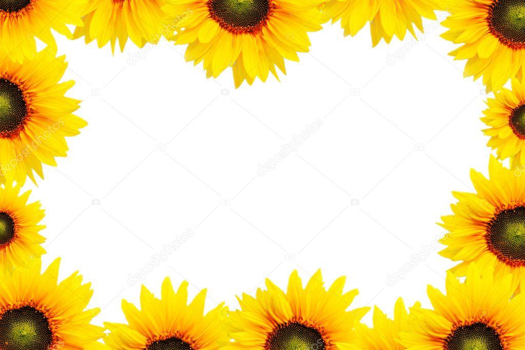 Sunflower Frame Sunflower Frame Photo by