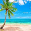 Stock Photo: Beach with coconut palm tree