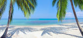 Panoramic tropical beach with coconut palm — Stock Photo