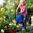 Stock Photo: Girl watering flowers are watered from