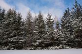 Vue d'hiver avec des arbres — Photo