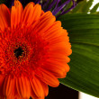 Red gerbera daisy flower — Stock Photo