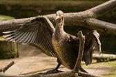 Albatross bird with — Stock Photo