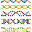 Stock Vector: DNA strands