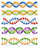DNA strands — Stock Vector