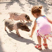 Small girl feeds little pigs — Stock Photo