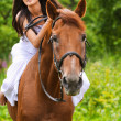 Young brunette woman rides a horse — Stock Photo