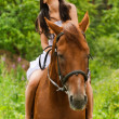 Young smiling woman riding horse — Stock Photo