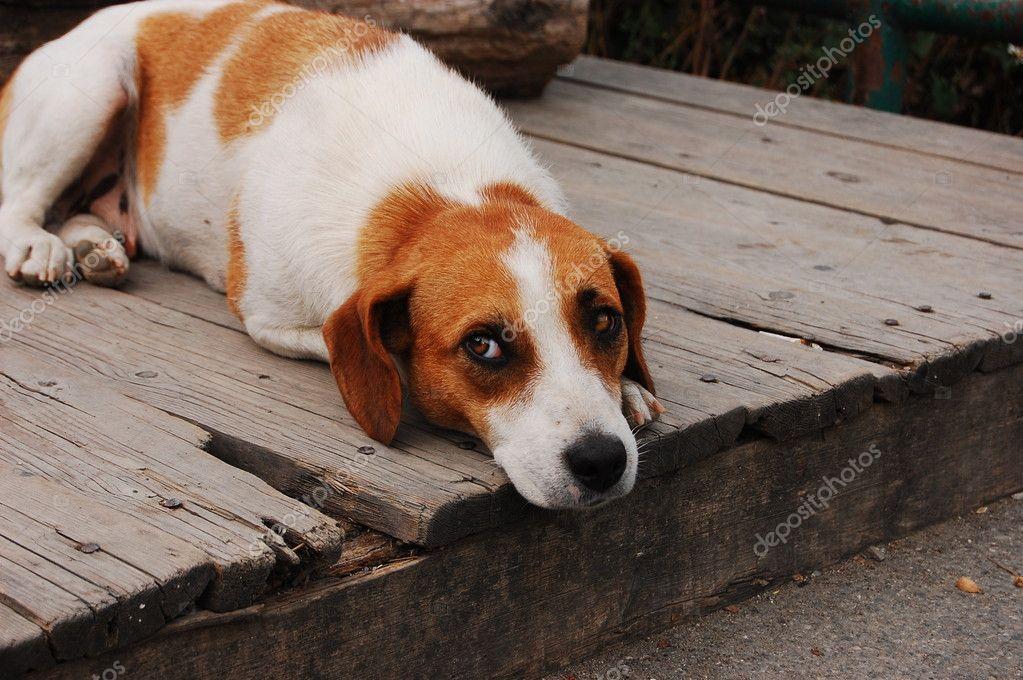 Lying sad stray dog — Stock Photo © ollikainen #6431493