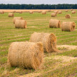Field with straw bale — Stock Photo