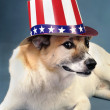 Uncle Sam Dog. — Stock Photo