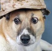 Perro marine corp. — Foto de Stock