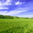 Spring sunny day landscape - Stock Photo