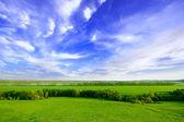 Spring sunny day landscape — Stock Photo