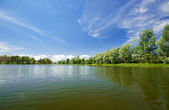 Forest lake under cloudy sky — Stock Photo