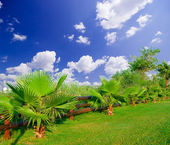 Garden with palm-trees — Stock Photo
