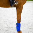 Dressage horse - Foto Stock
